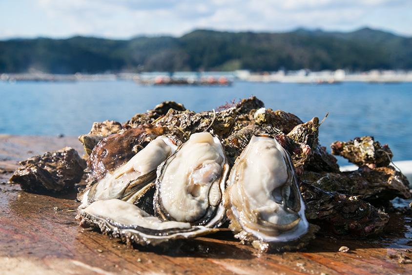 ITADAKIMASU:daidokoroの生産者が語る。「海は牡蠣の揺り籠-手間暇かければおいしくなる。」