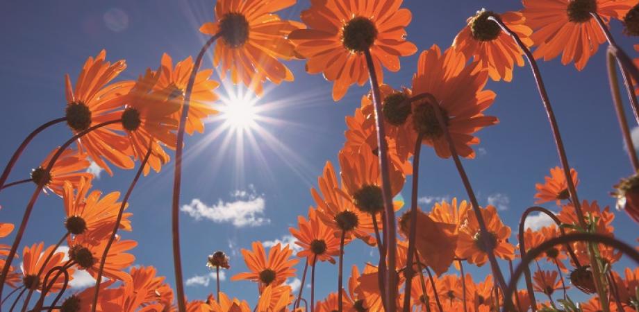 写真家・澤野新一朗×和ビーガンシェフ・本道佳子 ――「神々の花園」で食す「和ビーガン」の夕べ――